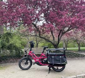 Rosie - Tern GSD S10 LX Electric Cargo & Family Bike